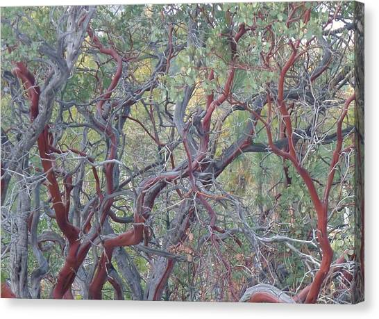 Idyllwild Red Tree Canvas Print