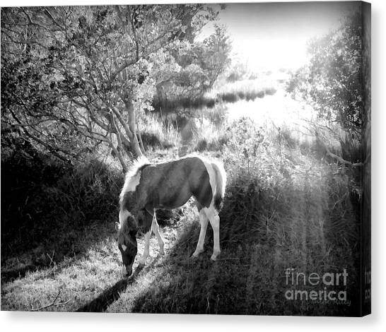 Maryland Horses Canvas Print - If There's A Heaven... by Janine Riley