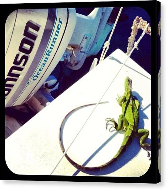 Iguanas Canvas Print - #iguana Chillen On My Boat... #florida by Jaynee Peterson