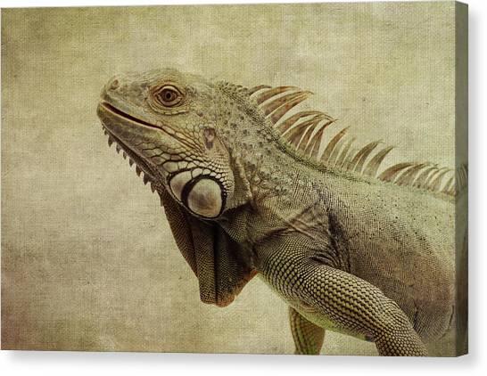 Iguanas Canvas Print - Iguana by Marina Kojukhova