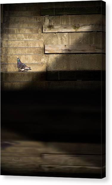 Pigeons Canvas Print - Il Piccolo Guardiano by Bob Orsillo
