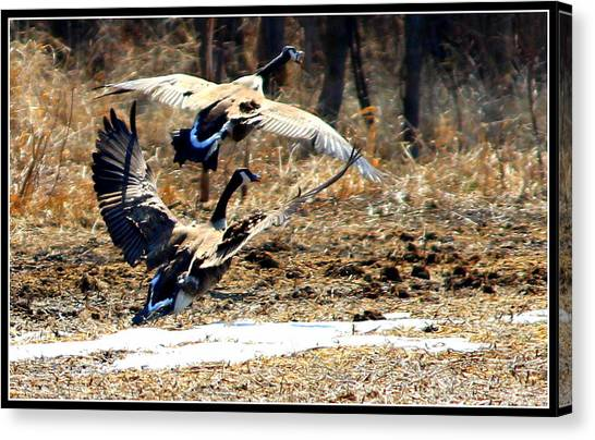 I'll Be Your Wing Man Canvas Print by Sheila Werth