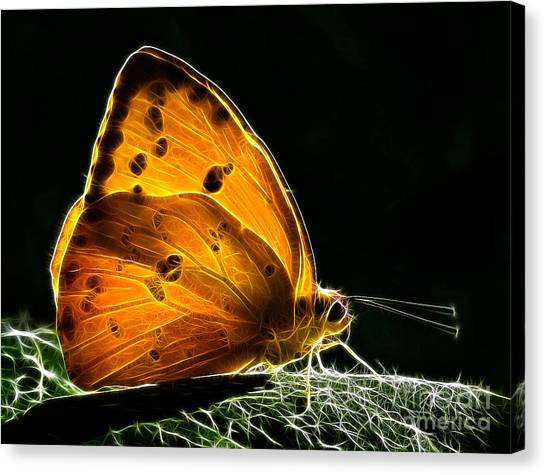 Illuminated Butterfly Canvas Print