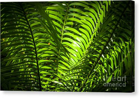 Illuminated Jungle Fern Canvas Print