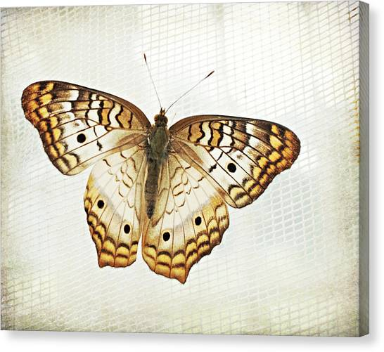 Yellow Butterfly Canvas Print - Illuminated Wings by Lupen  Grainne