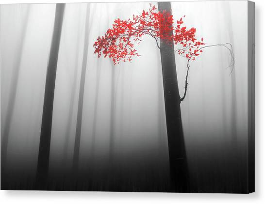 Foggy Forests Canvas Print - Illusion by Dragisa Petrovic