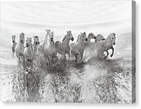 White Horse Canvas Print - Illusion Of Power (13 Horse Power Though) by Roman Golubenko