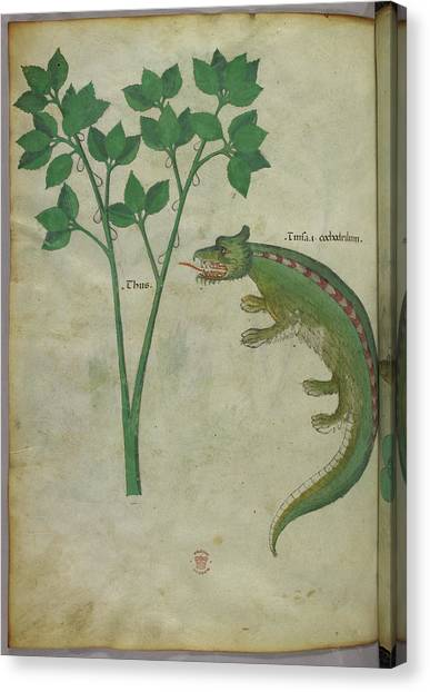 Crocodiles Canvas Print - Illustration Of A Plant And A Crocodile by British Library