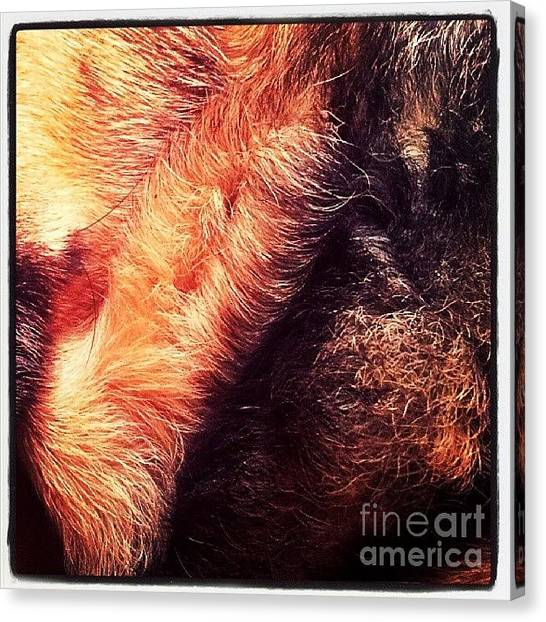 Prairie Dogs Canvas Print - #ilovemydog #dog #germanshepherddog by Abbie Shores
