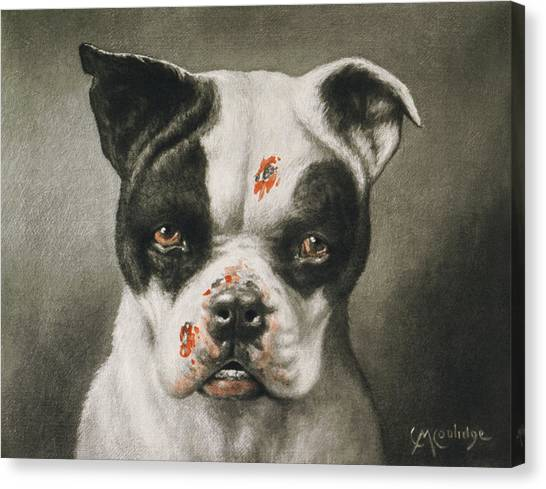 Boston Terriers Canvas Print - I'm A Bad Dog What Kind Of A Dog Are You Circa 1895 by Aged Pixel