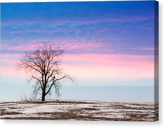I'm Just A Tree Canvas Print