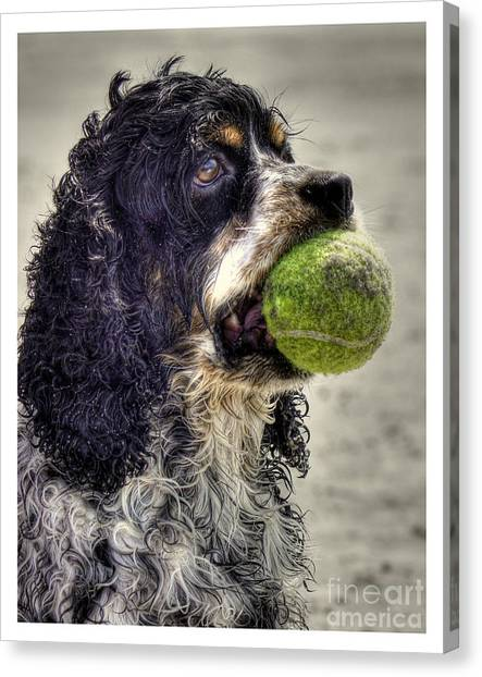 Cocker Spaniel Canvas Print - I'm Ready To Play by Benanne Stiens