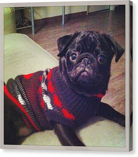 Pugs Canvas Print - I'm Really Confortable Dad, I Think by Carlos Sp