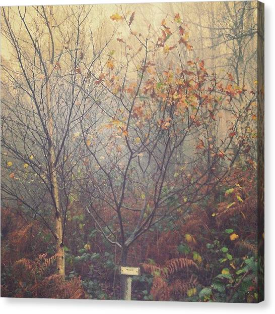 Foggy Forests Canvas Print - Imagine: Wandering Freely,  Never by Alexandra Cook
