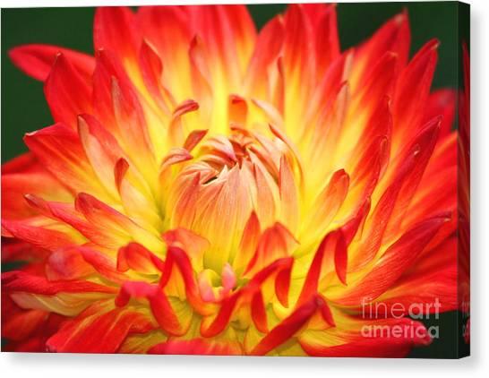 Img 0023 Flor En Rojo Detalle Canvas Print