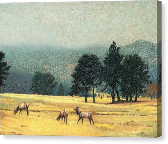 Impression Evergreen Colorado Canvas Print