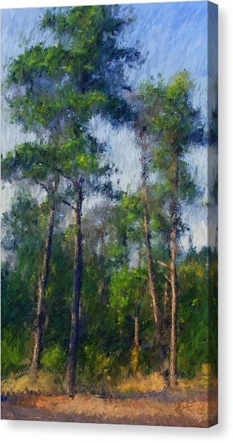 Impression Trees Canvas Print