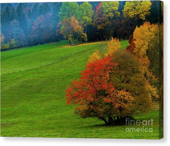 In A Field Of Green Canvas Print
