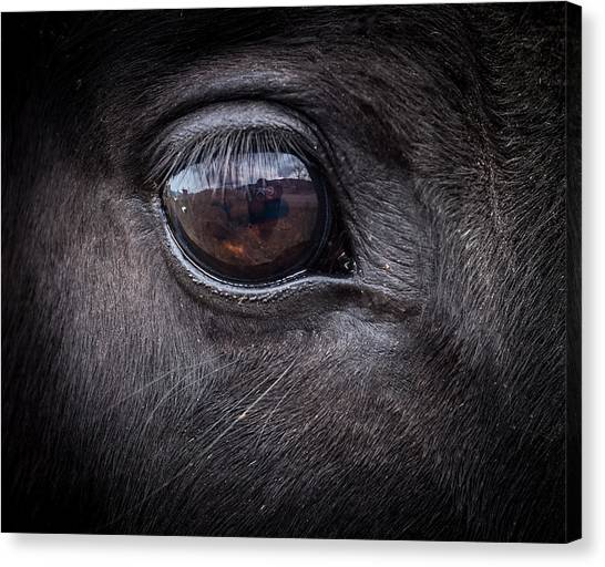 In A Horse's Eye Canvas Print