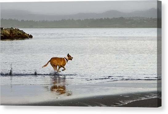 Canvas Print featuring the photograph In A Hurry by Jon Exley