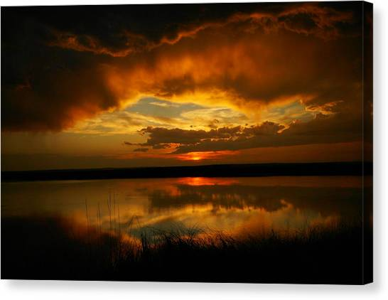 Wetlands Canvas Print - In All His Glory by Jeff Swan