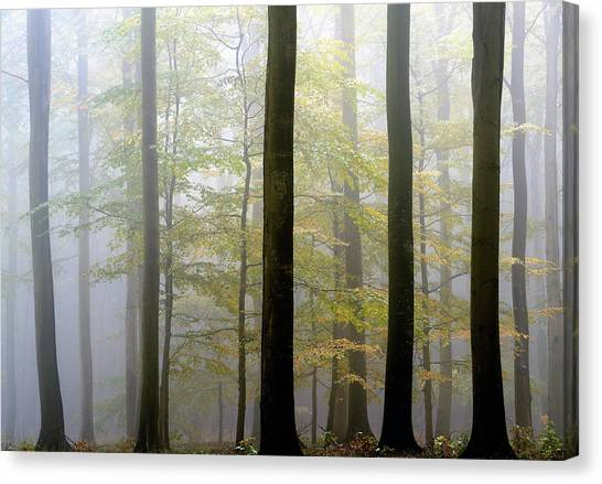 Tall Canvas Print - In Between by