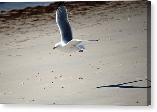In Flight Canvas Print by Alan Holbrook