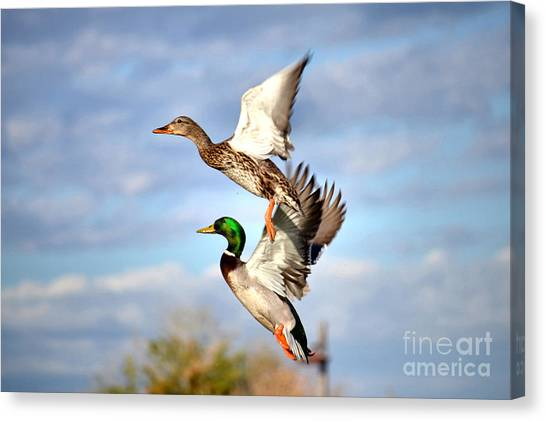 In-flight Canvas Print