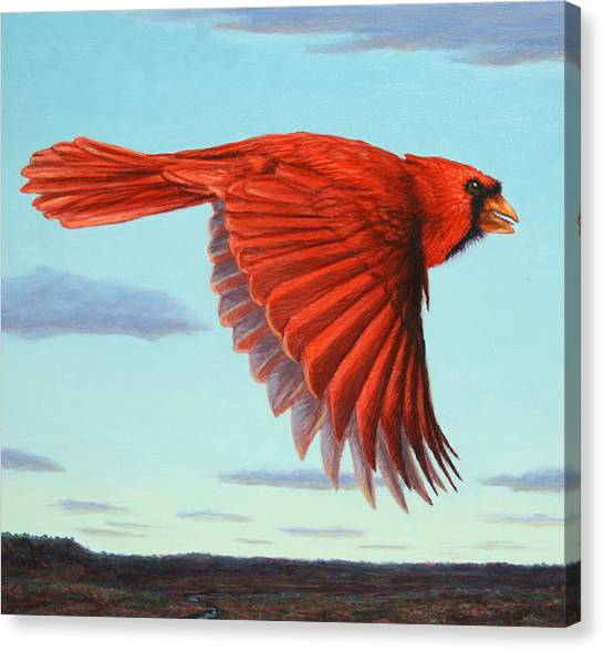 Cardinals Canvas Print - In Flight by James W Johnson