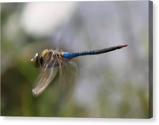 Dragonfly In Flight  Canvas Print
