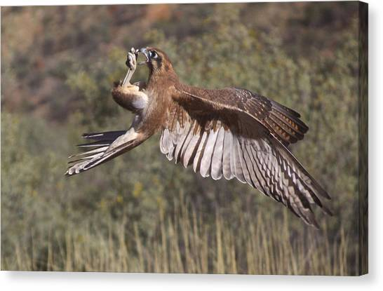 In Flight Meals Canvas Print