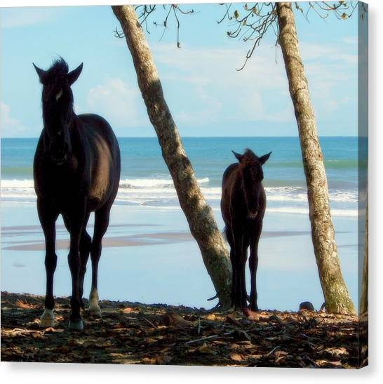 Costa Rican Canvas Print - In Her Image by Karen Wiles