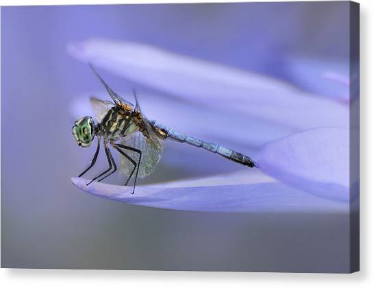 In Lily's Arms Canvas Print