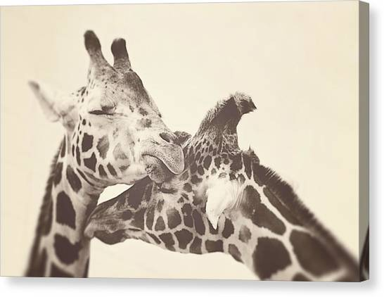 Giraffes Canvas Print - In Love by Carrie Ann Grippo-Pike