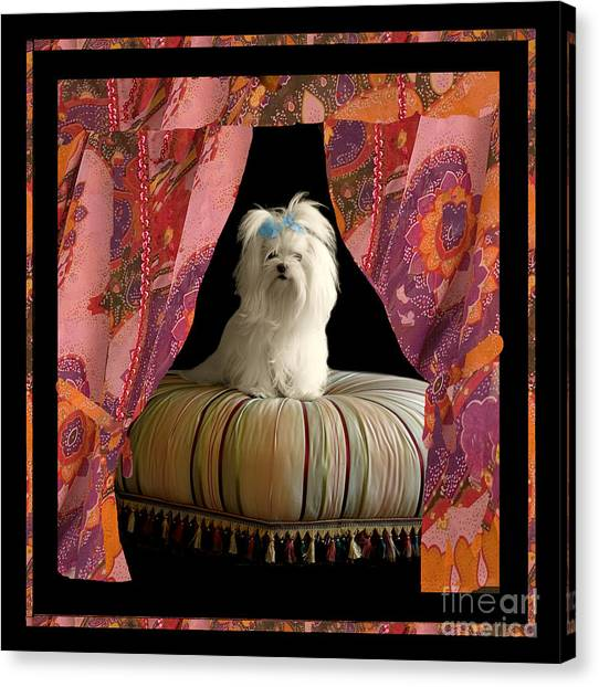 White Maltese Canvas Print - In Memory Of Ms Chloe - On Stage by Madeline Ellis
