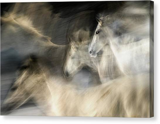 White Horse Canvas Print - In Motion by Milan Malovrh