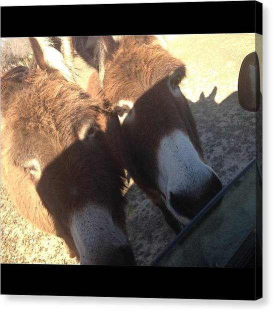 Donkeys Canvas Print - In My Phone Requested By @nicifrench 88 by Sandra Bilokonsky
