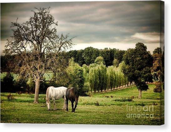 Draft Horses Canvas Print - In Perche by Olivier Le Queinec