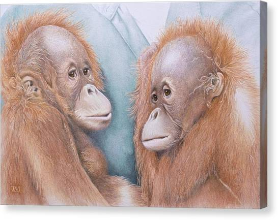 Canvas Print - In Safe Hands - Orang Utans by Jill Parry