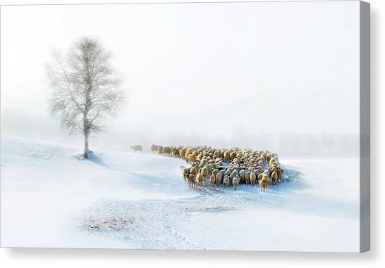 Birch Canvas Print - In Snow by Hua Zhu