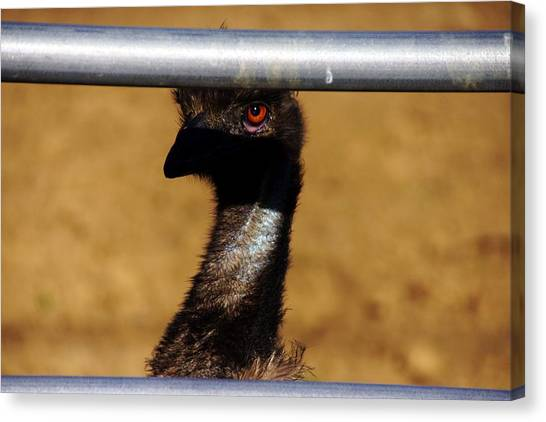 In The Eye Of The Emu Canvas Print by Michael Courtney