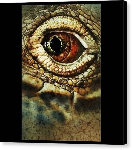 Iguanas Canvas Print - In The Eye Of The Iguana by Tanya Sperling