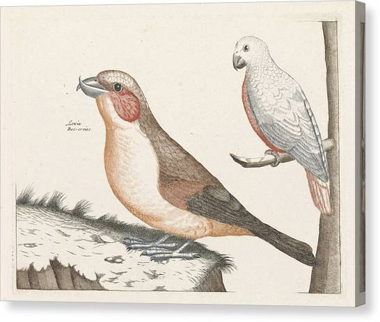Crossbills Canvas Print - In The Foreground A Crossbill, Right On A Branch A White by Anonymous