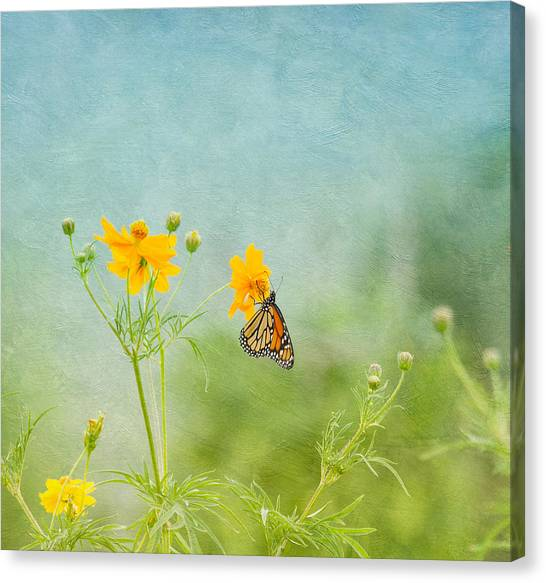 In The Garden - Monarch Butterfly Canvas Print