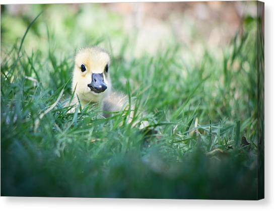Canvas Print featuring the photograph In The Grass by Priya Ghose