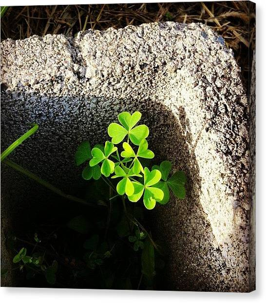 St. Patricks Day Canvas Print - In The Gutter Looking Up At The Stars by Kathleen Barnes