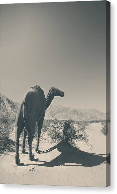 California Landscape Art Canvas Print - In The Hot Desert Sun by Laurie Search
