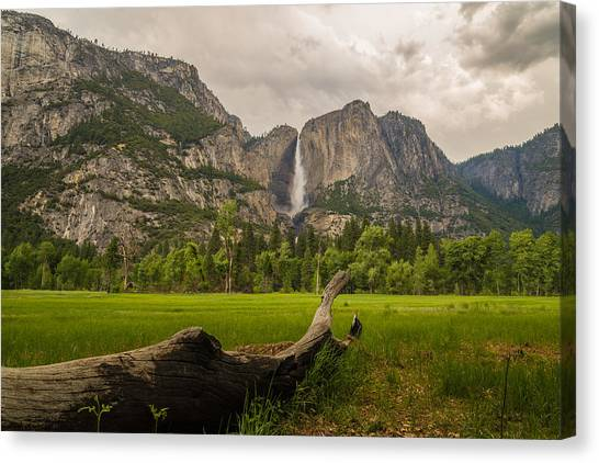 Yosemite Falls Canvas Print - In The Meadow by Kristopher Schoenleber
