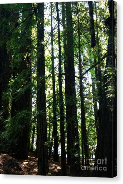 In The Midst Of Giants Canvas Print by Michelle Bentham