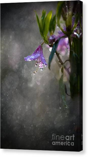 In The Morning Rain Canvas Print